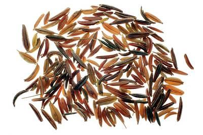 Caraway Seeds Poster by Victor De Schwanberg