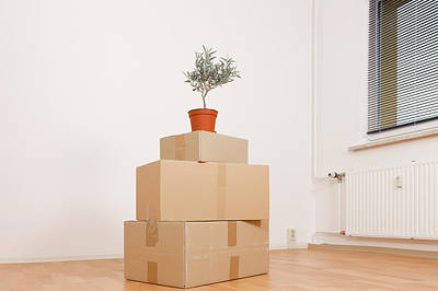 Cardboard Boxes And Pot Plant Poster by Wladimir Bulgar