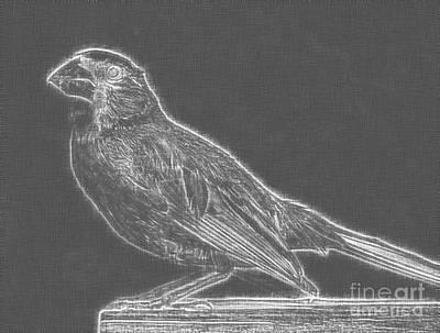 Cardinal Bird Glowing Charcoal Sketch Poster