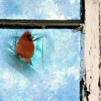 Cardinal In The Frost Poster by Jon Woodhams