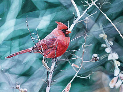 Cardinal In Winter Poster by Joshua Martin