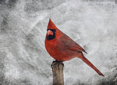 Cardinal Watching Poster by Sandy Keeton