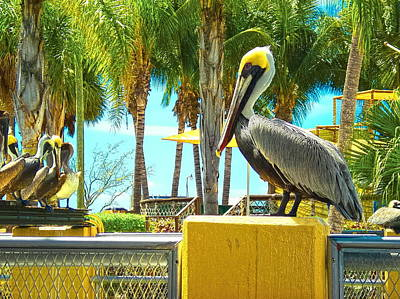 Caribbean Brown Pelican Poster by Sandra Pena de Ortiz