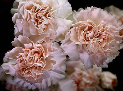 Carmel Carnations Poster by Mavis Reid Nugent