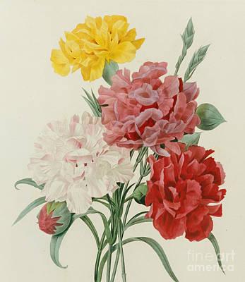 Carnations From Choix Des Plus Belles Fleures Poster