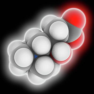 Carnitine Molecule Poster