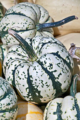 Carnival Squash Striped Green And White Poster