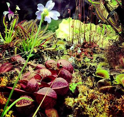 Carniverous Plants Poster