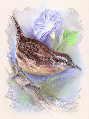 Carolina Wren With Morning Glory Poster