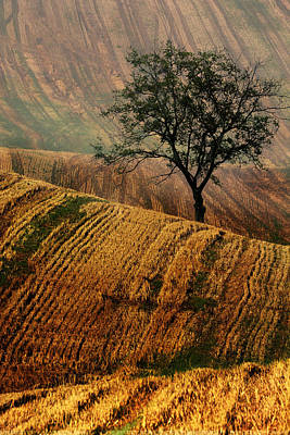 Carpet Fields Of Moravia Poster by Jaroslaw Blaminsky
