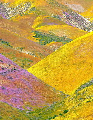 Carrizo Wildflowers Vertical Poster by Marc Crumpler