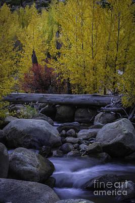 Carson River Autumn Poster