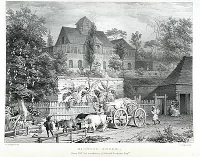 Carting Sugar Poster by British Library
