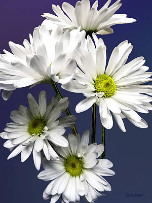 Cascade Of White Daisies Poster