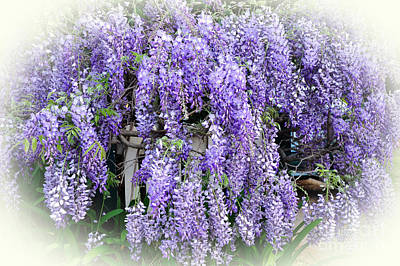 Cascading Wisteria Poster by Kaye Menner