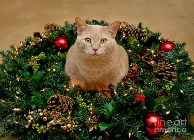 Cat And Christmas Wreath Poster