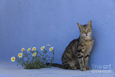 Cat And Flowers In Greece Poster by Jean-Louis Klein and Marie-Luce Hubert