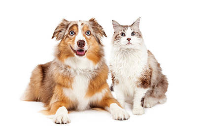 Cat And Happy Dog Together Poster