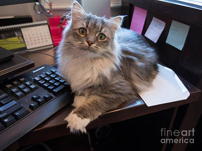 Cat And Keyboard Poster by Louise Heusinkveld