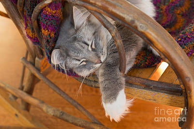 Cat Asleep In A Wooden Rocking Chair Poster by Louise Heusinkveld