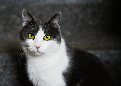 Cat Black And White With Green And Yellow Eyes Poster