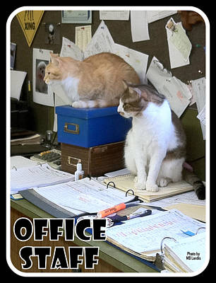 Poster featuring the photograph Cat Business by Mary Beth Landis