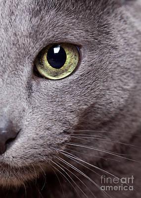 Cat Eye Poster by Nailia Schwarz