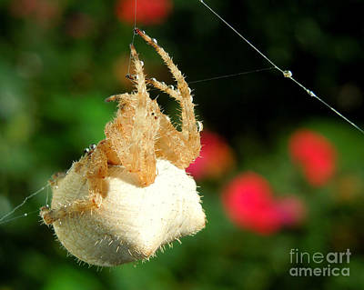 Cat-faced Spider With Pink Poster by Heidi Manly