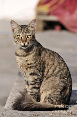 Cat In Aegina Island Poster by George Atsametakis