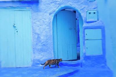 Cat In Doorway, Chefchaouen, Morocco Poster by Peter Adams