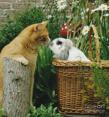 Poster featuring the photograph Cat Kisses Rabbit by Jeepee Aero