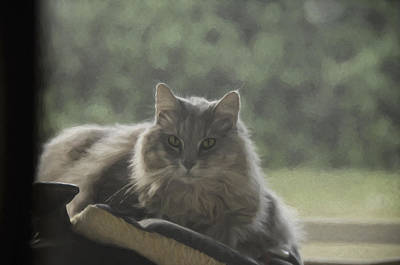 Cat N Saddle Poster