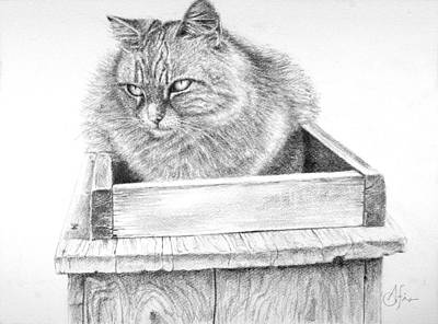 Poster featuring the drawing Cat On A Box by Arthur Fix