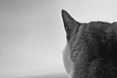 Cat On Alert Poster