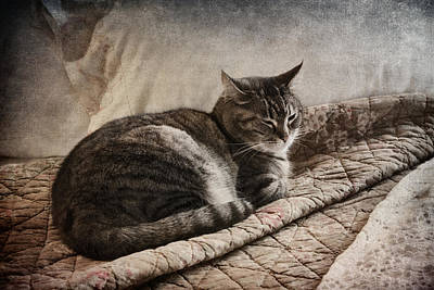 Cat On The Bed Poster by Carol Leigh