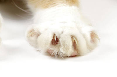 Cat Paw With Claws Poster