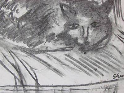 Cat Relaxing Poster