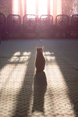 Cat Sitting Near Window Poster by Matteo Colombo