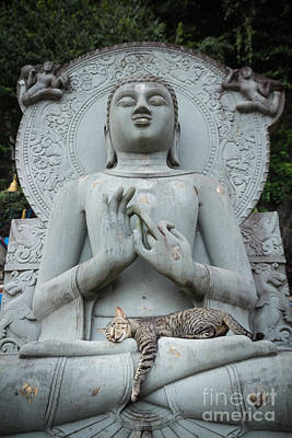 Cat Sleeping On The Lap Buddha Statues. Poster by Tosporn Preede