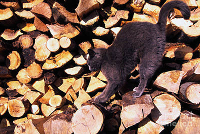 Cat Stretching On Firewood Poster by Thomas R Fletcher