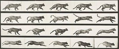 Cat Trotting Changing To A Gallop Poster by Celestial Images