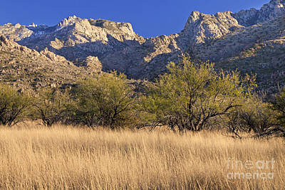 Catalina State Park Poster by Richard & Ellen Thane