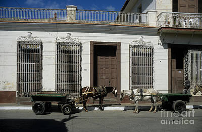 Horses Catching Up In Cuba Poster by James Brunker