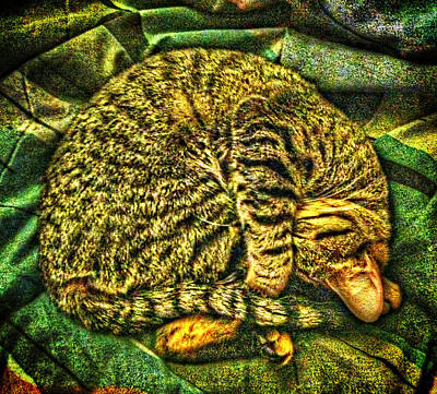 Catnappin' On A Cold Rainy Sunday Poster by Randy Forrester