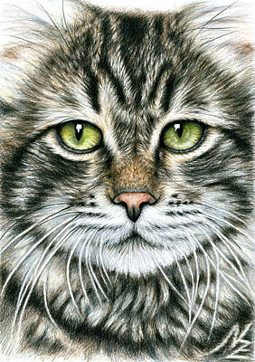 Cats Face Poster