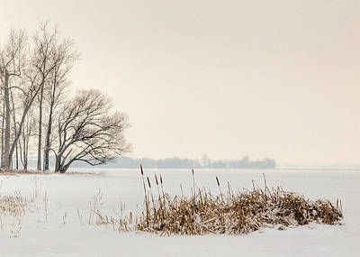 Cattails By The Shore In Winter Poster