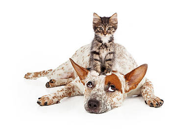 Catte Dog With Kitten On His Head Poster