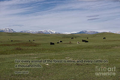 Cattle And Bible Verse Poster by David Arment