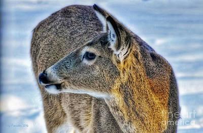 Cautious Deer Poster