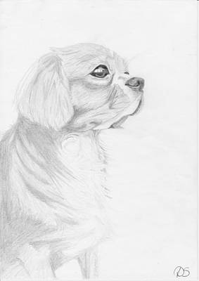 Cavalier King Charles Spaniel Poster by David Smith